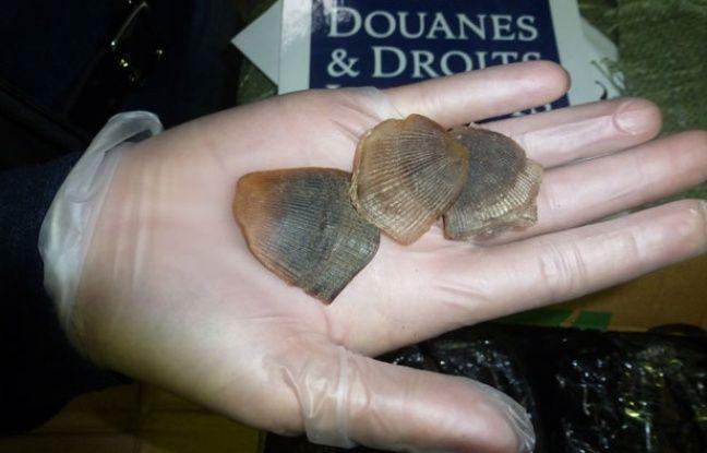 Les douaniers ont saisi 250 kg d'écailles de pangolin à Roissy.