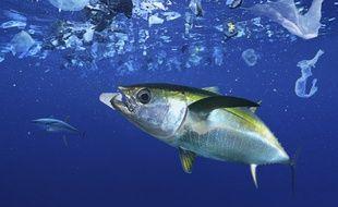L'île de déchets de plastique s'étend sur plusieurs dizaines de kilomètres au large de la Corse.