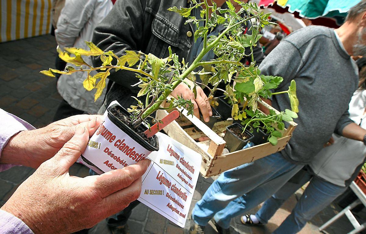"""Les militants ont symboliquement planté des """" légumes clandestins """". – F. Scheiber/20 Minutes"""