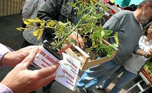 """Les militants ont symboliquement planté des """" légumes clandestins """"."""