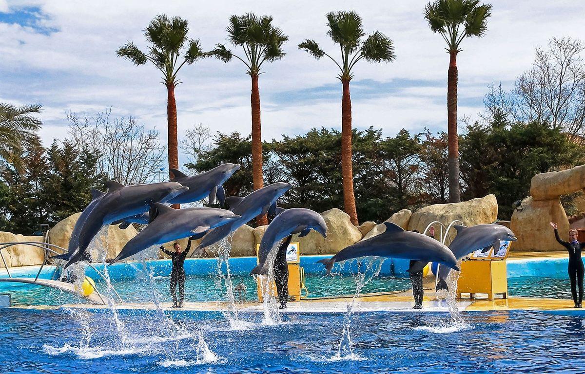 Spectacle de dauphins au Marineland d'Antibes. (Illustration) –  BEBERT BRUNO/SIPA