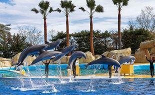 Spectacle de dauphins au Marineland d'Antibes. (Illustration)