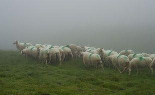 Un troupeau de brebis dans les Pyrénées. Illustration.