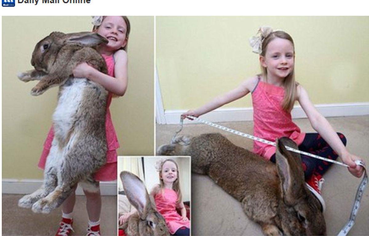 Le plus gros lapin du monde. – Twitter