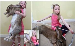 Le plus gros lapin du monde.