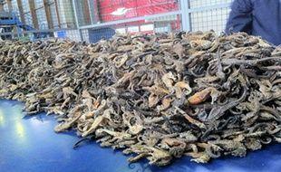 Des milliers d'hippocampes déshydratés saisi à Roissy par la douane (illustration).