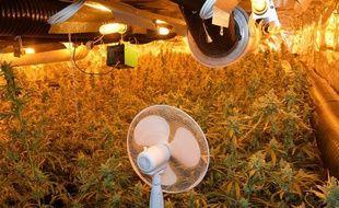 Une plantation de 1.000 plants de cannabis découverte à Roubaix.