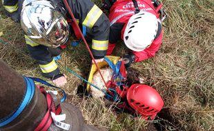 Les pompiers ont sauvé un chien tombé dans un puits.
