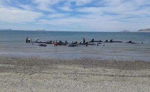 Les baleines se sont échouées à Ensenada, au Mexique.