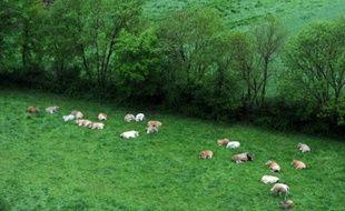 Des vaches ruminent dans un pré près de la Sèvre nantaise, le 3 mai 2015 à Mortagne-sur-Sèvre, en Vendée