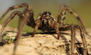Araignée. Image d'illustration.