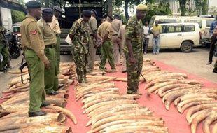 La police kenyanne présente le 5 juin 2014 302 pièces d'ivoire, dont 228 défenses d'éléphants, saisies dans le port de Mombasa