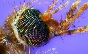 Le moustique, vecteur du paludisme (illustration).