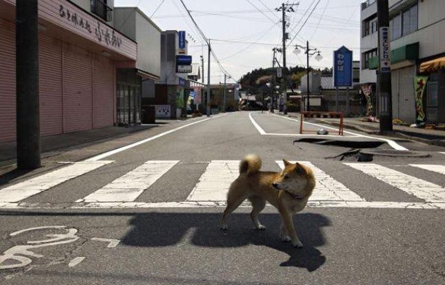Au Japon, la zone morte autour de Fukushima 648x415_20mn-4417
