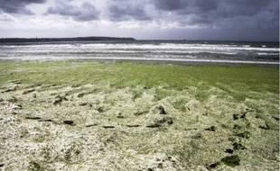 Les algues vertes ont proliféré en juin sur les plages du Finistère, comme ici à Douarnenez.