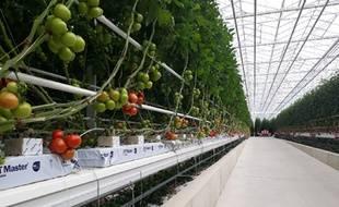 Huit hectares de serres de tomates sont chauffées grâce au centre de stockage des déchets de Lapouyade, en Gironde.