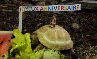 La tortue albinos de la Vallée des tortues.