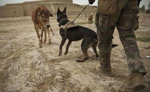 Le chien Wilbur, lors d'une mission avec une équipe des Opérations spéciales de la Marine américaine dans la province de Helmand en Afghanistan, le 15 avril 2013.