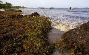 """Le Haut conseil de la santé publique a recommandé lundi la mise en place d'une """"filière de valorisation"""" des algues brunes échouées en Guadeloupe et Martinique pour éviter que ces algues, aujourd'hui sans danger, ne posent un problème sanitaire."""
