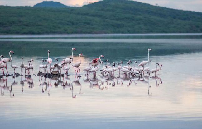 Le lac Nakuru, au Kenya.