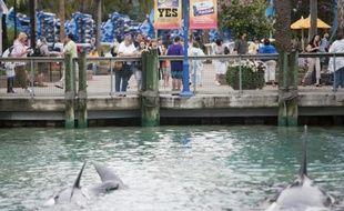 Des visiteurs regardent des orques dans un bassin de Seaworld à orlando, en Floride, le 24 février 2010