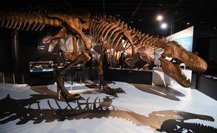 Un squelette de T-Rex exposé à New York