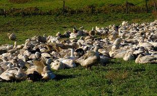 Les élevages concernés sont placés sous surveillance sanitaire.