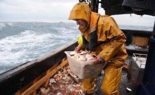 Un marin-pêcheur lors d'une journée de pêche à la coquille Saint-Jacques dans la baie de Saint-Brieuc le 3 décembre 2008.