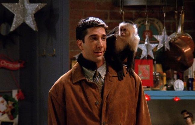 Le capucin Marcel a mis pas mal d'ambiance sur le tournage de « Friends ».