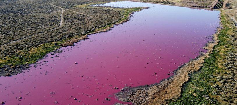 La lagune Corfo, en Patagonie (Argentine), est devenue rose après que des déchets provenant de sociétés de pêche ont été déversés dans ses eaux, le 23 juillet 2021.