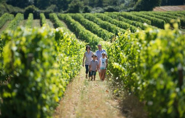 Randonnée dans le vignoble du Layon (Maine-et-Loire).