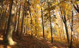 Avec ses couleurs flamboyantes et ses températures douces, l'automne est la saison préférée des poètes et des amoureux de la nature.