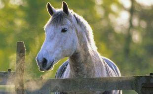 Un cheval (illustration).