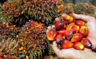 Le ministre allemand de l'Agriculture a appelé mercredi l'industrie allemande à cesser l'importation d'huile de palme non certifiée