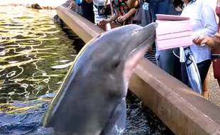 Un dauphin du parc SeaWorld (Etats-Unis) en train de saisir l'iPad d'une touriste, en août 2016.