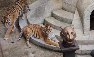 Les tigres de « Fort Boyard » disparaîtront-ils un jour ?