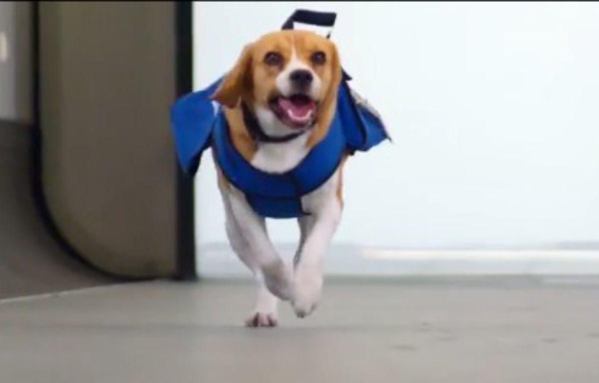 Sherlock, le chien employé par la compagnie KLM au service des objets trouvés. – Capture d'écran