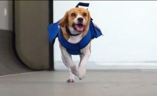 Sherlock, le chien employé par la compagnie KLM au service des objets trouvés.