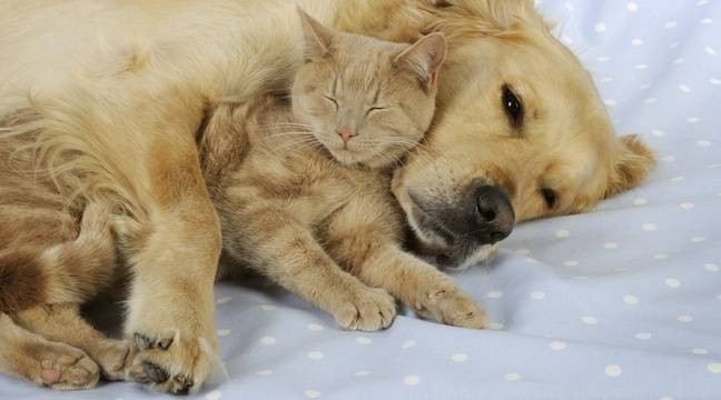 La salive des chiens et des chats peut s'avérer mortelle alertent des médecins