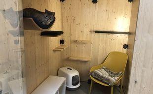 L'hôtel pour félins Georges Cat à Vertou, près de Nantes