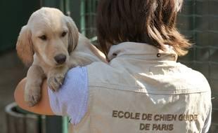 Illustration de travail effectué par les ecoles de chiens guides affiliées a la Federation Francaise des Associations de chiens guides d'aveugles (FFAC).