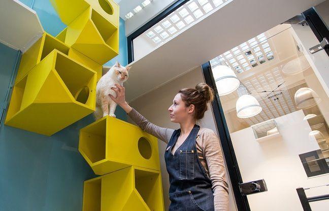 L'hôtel pour chats Aristide est situé à Paris