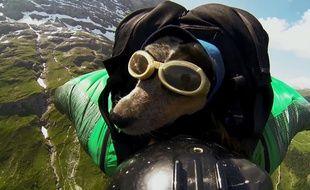 Le chien Whisper réalise un saut avec son maître, Dean Potter, sur une vidéo postée le 27 mai 2014.