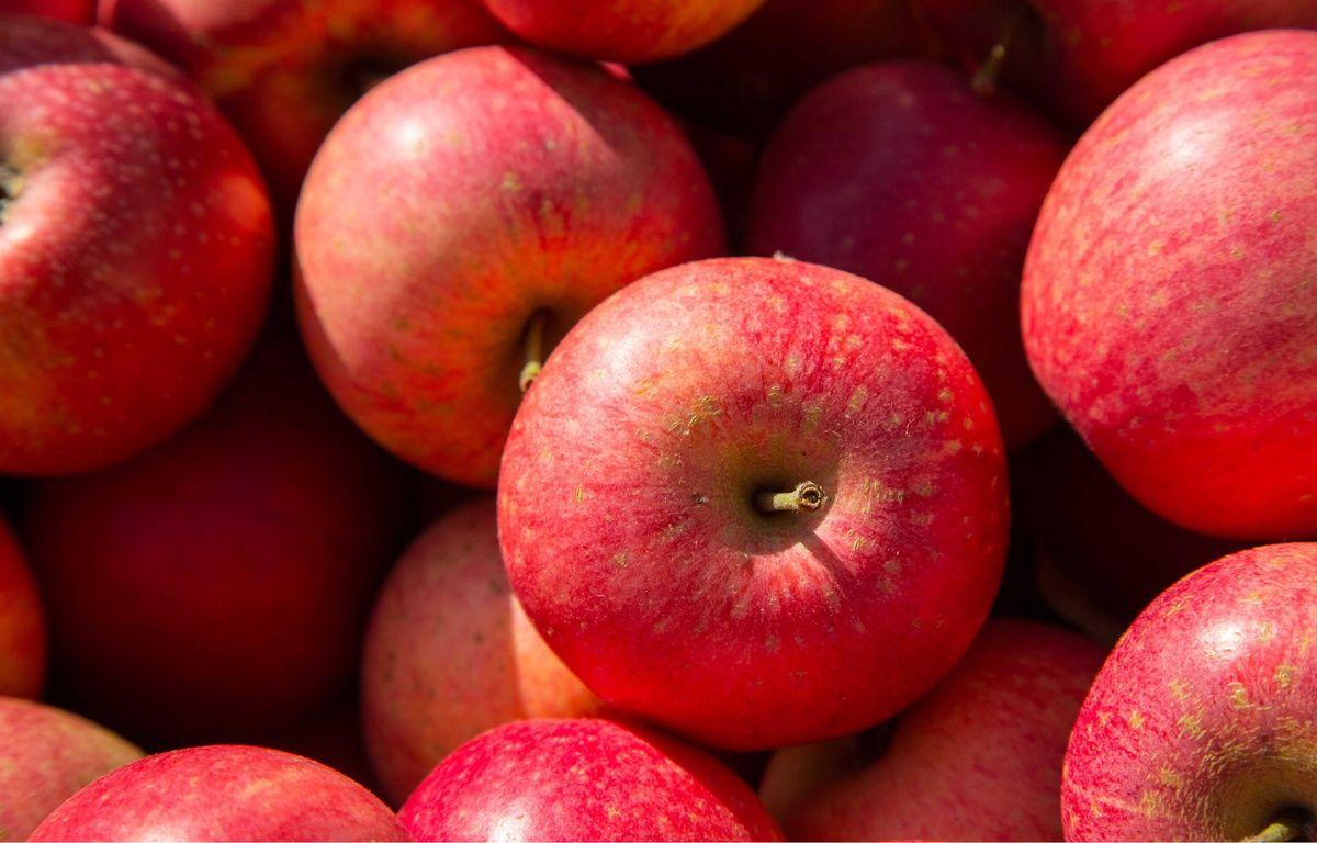 Illustration pommes. – CLOSON DENIS/ISOPIX/SIPA