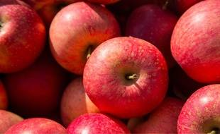 Illustration pommes.