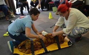 La société Premiers secours animaliers dispense des formations pour apprendre à poser un diagnostic et effectuer les gestes qui permettent d'augmenter les chances de survie d'un animal blessé.
