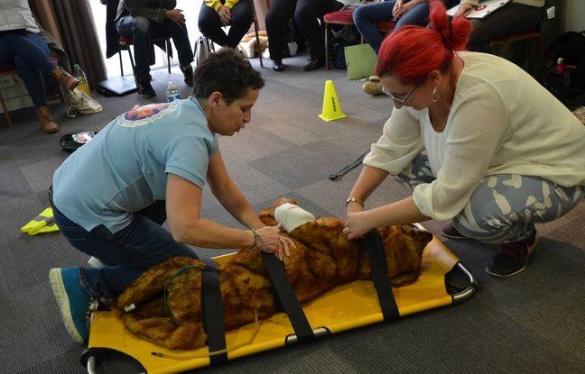 Lyon: Apprendre les gestes de premiers secours pour sauver son chien ou son chat