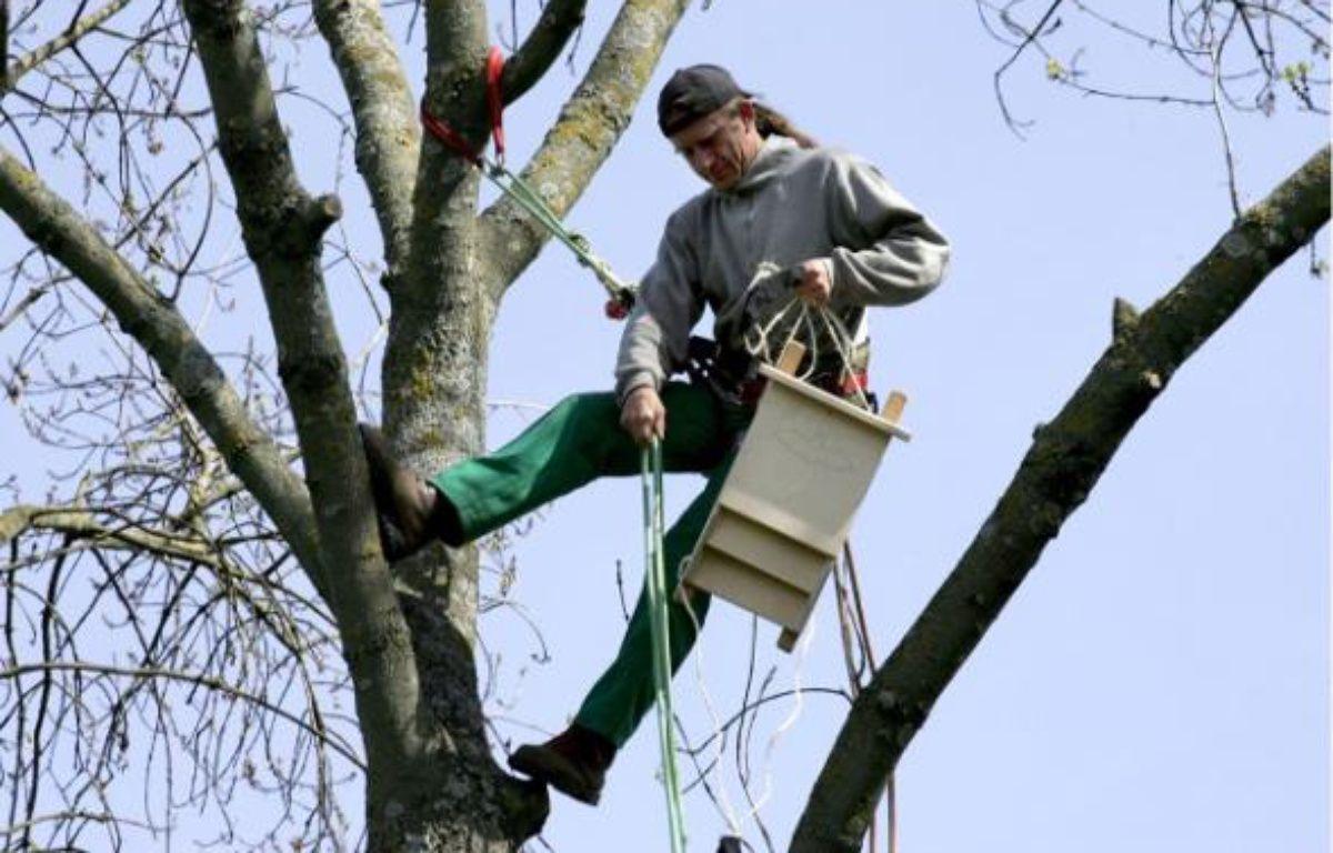 Des abris pour accueillir les chauves-souris, dans le Parc de la Maourine, Toulouse, afin de lutter contre la chenille processionnaire du pin.  –  F. SCHEIBER / 20 MINUTES
