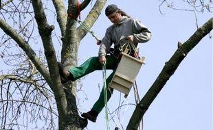 Des abris pour accueillir les chauves-souris, dans le Parc de la Maourine, Toulouse, afin de lutter contre la chenille processionnaire du pin.