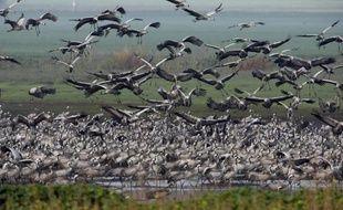 Des oiseaux migrateurs le 24 février 2009 dans le nord d'Israël